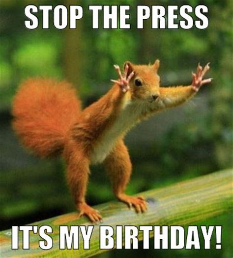 Funny Animal Birthday Memes - 52 best images about happy birthday memes on pinterest traditional happy birthday wishes and