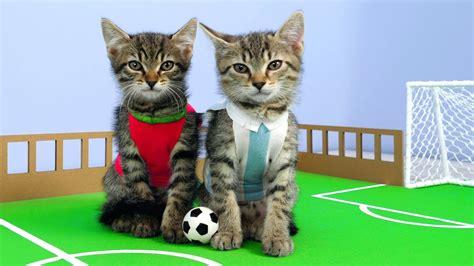 twin kittens play football cute rivals match fun cat