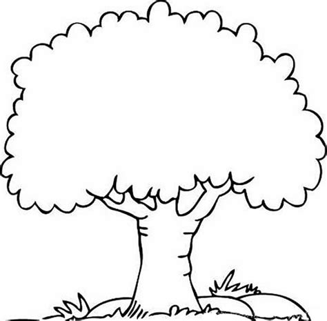 coloring pages coloring trees tree coloring pages