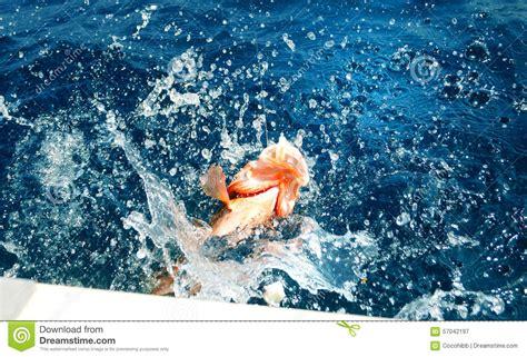florida grouper fishing caught trip