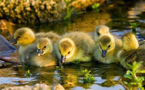 inspirements  beautiful birds   world