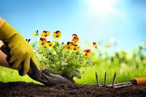 send flowers today is for planting