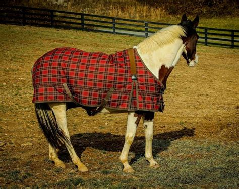 horse blankets blanket horses need everything know turnout types waterproof climate choose right different tough