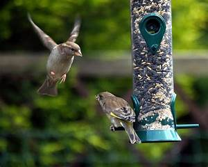 Bird's and Backyard Wildlife | Sargent's Nursery  Bird