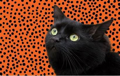 Halloween Cat Happy Cats Gifs Blackcat Care