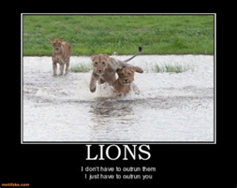 funny picture clip   funny animal demotivational
