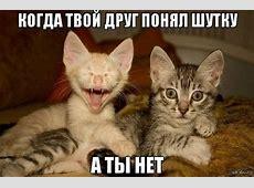 Смешные картинки котят с надписями 35 фото • Прикольные