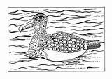 Coloring Albatross Arctic Adult Animal Printable Animals Snow Favecrafts sketch template