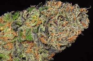 Strain Review  Sour Diesel