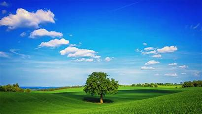 Plain Tree Field Wallpapers Nature Fields 4k