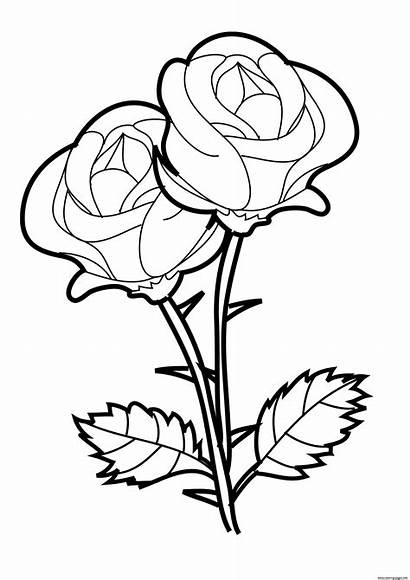 Coloring Valentines Rose Pages Printable