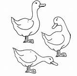 Coloring Geese Pages sketch template