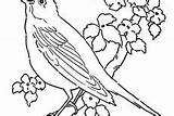 Canary Bird Coloring Pages Hungry sketch template