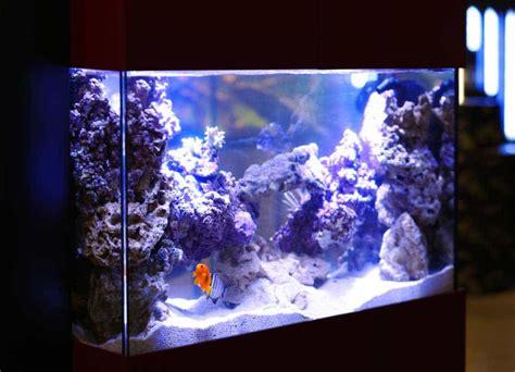 heure eclairage aquarium mon tout premier aquarium guide pour bien d 233 buter