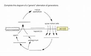 Solved  Complete This Diagram Of A  U0026quot Generic U0026quot  Alternation O
