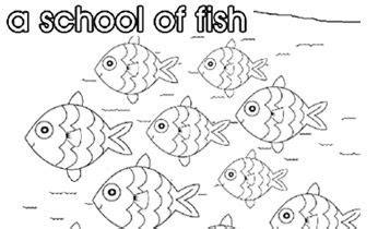 collective nouns  school  fish collective nouns
