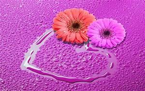 Love Flowers Wallpaper