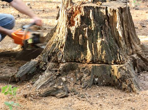 Stump Removal Do It Yourself Hgtv