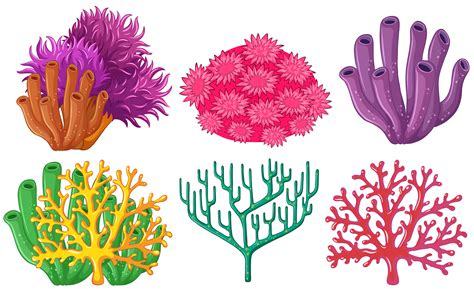 types  coral reef   vectors