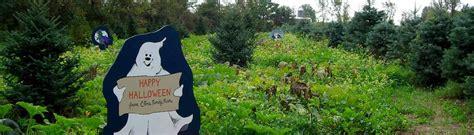 christmas tree farms upstate ny 19 christmas tree farms upstate ny a myriad of fall 5890