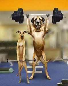 Big Dog Litte Dog Lifting Weights Memes Bmi Calculator