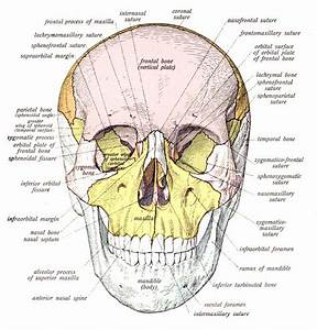 Head Skull Neck Anatomy Archives - Page 8 Of 26