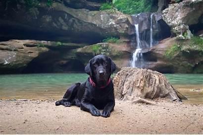 Labrador Dogs Wallpapers Dog Retriever Waterfall Lake