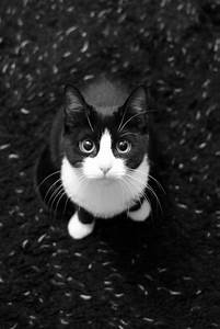 Ginny the Black and White Kitten | Ginny, taken in B&W due ...