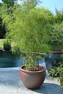 Bambus Im Garten : bambus im garten als k belpflanze einsetzbar geeignete bambusarten balkon terrasse pinterest ~ Markanthonyermac.com Haus und Dekorationen