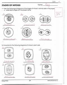 Animal Cell Mitosis Diagram