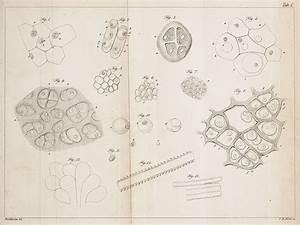 Theodor Schwann - Scientist Of The Day