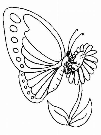 Mariposas Colorear Dibujos Imprimir Coloring Schmetterling Butterfly