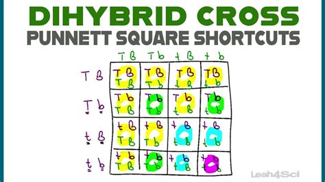 A dihybrid punnett square with two parents that are each homozygous dominant for one trait and homozygous recessive for a second trait. Dihybrid Cross Punnett Squares + MCAT Shortcut (Mendelian Genetics Part 2) - YouTube