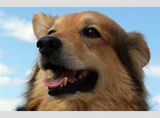 CushingSyndrom beim Hund