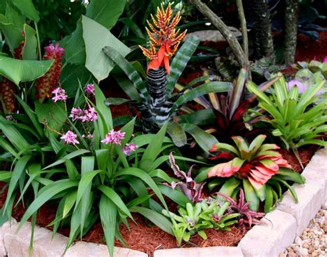 different types of bromeliads with pictures pin by elspeth on gift ideas for me pinterest
