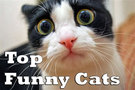 top funny cats funny cat fails compilation youtube