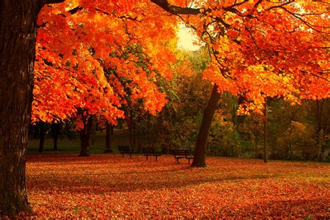 cool fall backgrounds  images