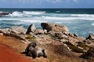 Visiting Cape Of Good Hope | Cape Town, South Africa ...