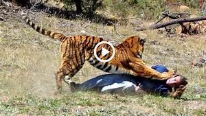 Hungry Tiger kills man in zoo original video
