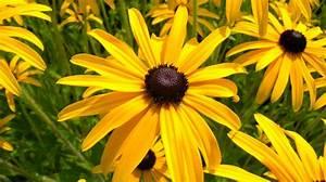 Blumen Für Schattige Plätze : die 10 sch nsten gelben blumen f r garten und balkon ~ Michelbontemps.com Haus und Dekorationen