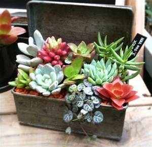 Arreglos con Crasas o Suculentas Blog de Cactus PFC