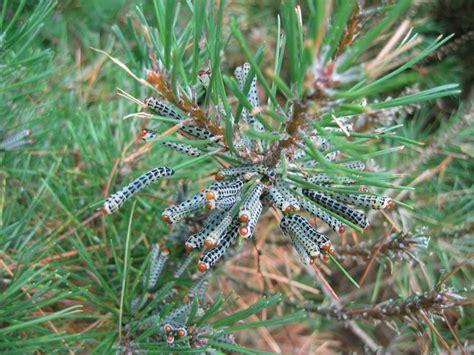 Garden Pests Worms Photos