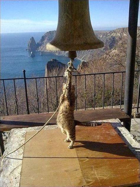 funny cat ringing church bell luvbat