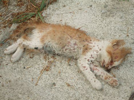 Dead Cats  Photos  Funny And Cute Animals