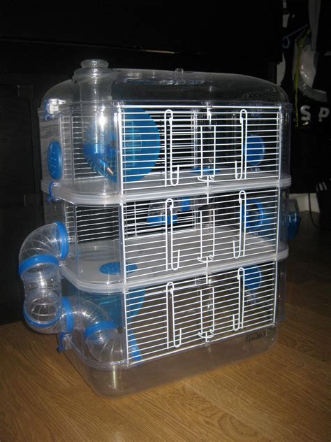 cherche recherche don de chinchilla contre don de souris