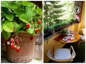 Erdbeeren Richtig Pflanzen : erdbeeren auf balkon und terrasse in topf kasten k bel ~ Lizthompson.info Haus und Dekorationen