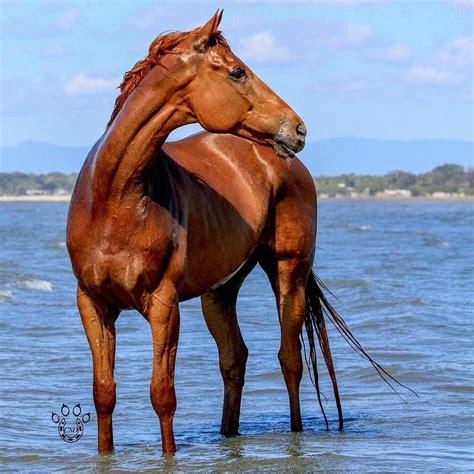 horse fire water scorpio horses races majestic fna fsnc1 scontent fbcdn