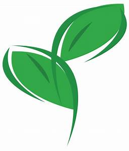 Eco Office Plants - eco-friendly plant displays and