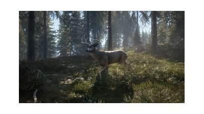Wild Call Blacktail Deer Thehunter Studios Avalanche