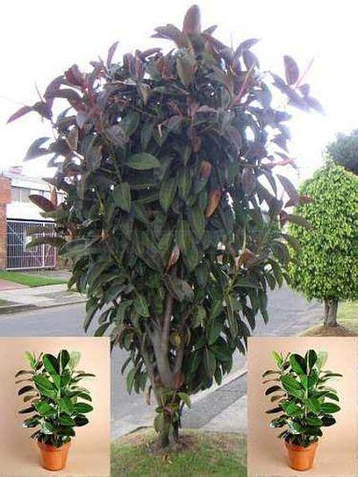 jenis tanaman bunga jenis jenis tanaman hias